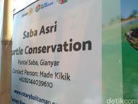 Saba Asri Turtle Conservation (Azizah/detikTravel)