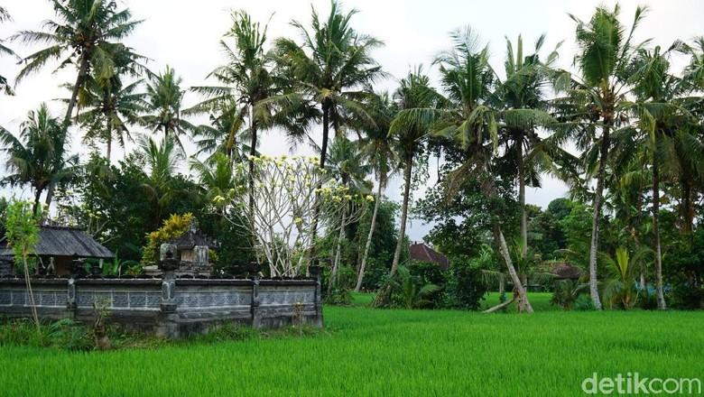 Desa Wisata Ekologis Nyambu di Tabanan, Bali