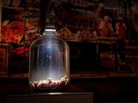 Hii... 10 Makanan Ini Paling Menjijikkan di 'Disgusting Food Museum'