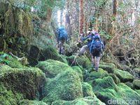 Menembus hutan lebat di Taman Nasional Lorentz