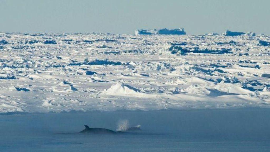 Ilmuwan Temukan Parasit dalam Jumlah Besar di Antartika
