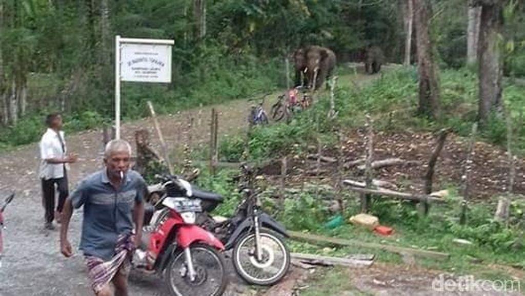 Lihat Gajah Masuk Perkampungan di Aceh, 2 Bocah Pingsan