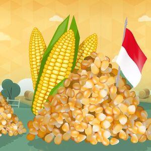 Petani Jagung Yakin Target Produksi 2019 Bisa Tercapai