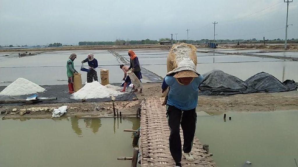 Curhat Petani Garam: Musim Hujan  4 Lahan Tambak Gagal Panen