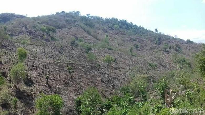 Ilustrasi lahan gundul di daerah perbatasan Bima-Dompu (Syarif/istimewa)