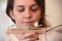 Dapurnya Dipenuhi Tikus, Wanita Ini Harus Ngungsi Masak di Rumah Tetangga