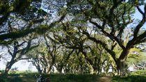 Kembaran Hutan Lord of The Rings di Ujung Pulau Jawa