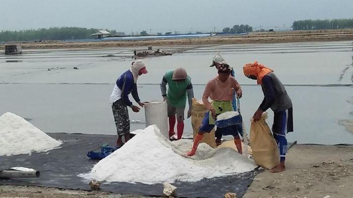 Petani garam di Rembang-Jawa Tengah/Foto: Arif Syaefudin/detikcom