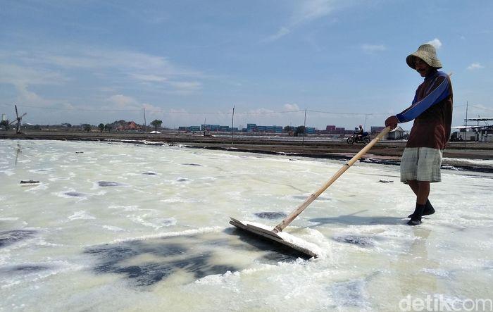 alah satu petani garam di Surabaya, Misnal (55) sedang memanen garam.