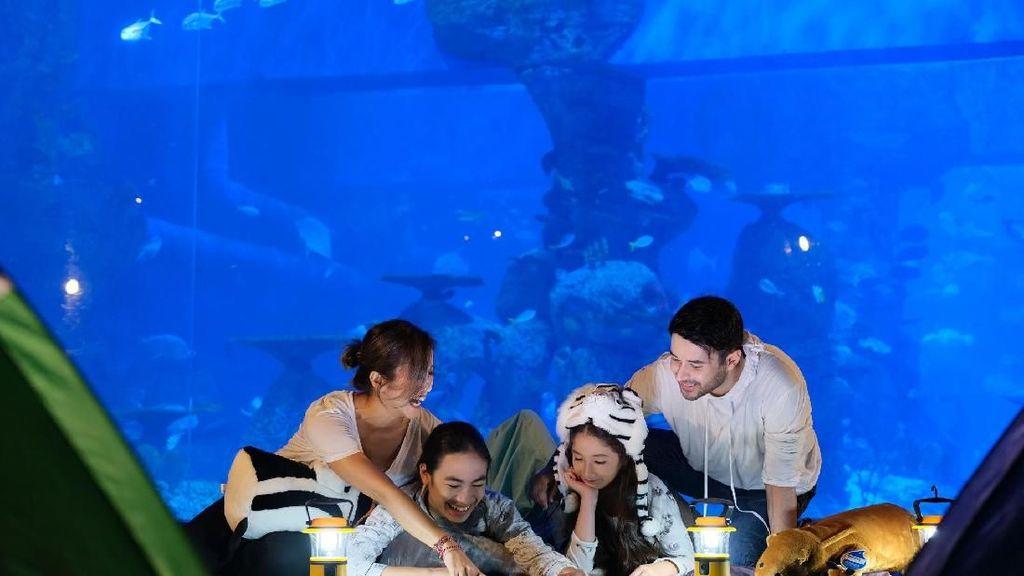 Mau Menginap di Bawah Laut? Yuk, Mampir ke Jakarta Aquarium