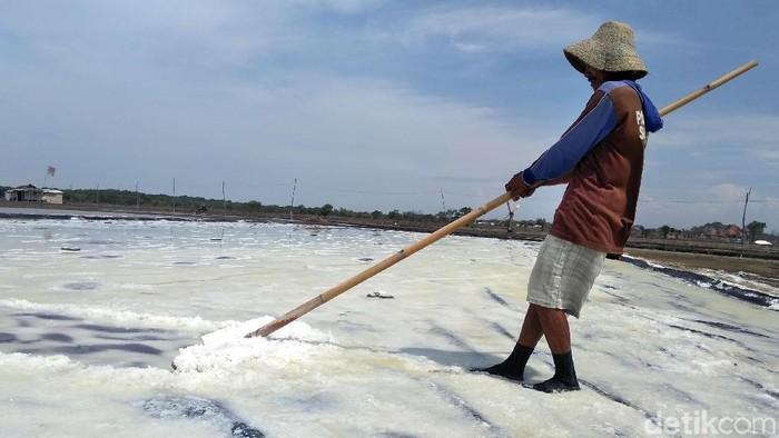 Petani garam tradisional (Foto: Deny Prasetyo Utomo)