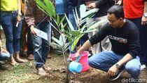 Momen Anies Tanam Buah Salak di Hari Ciliwung