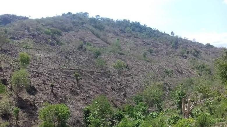 Foto: Bukit gundul di perbatasan Bima-Dompu (Syarif/istimewa)