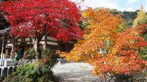 Indahnya Musim Gugur di Pinggiran Osaka