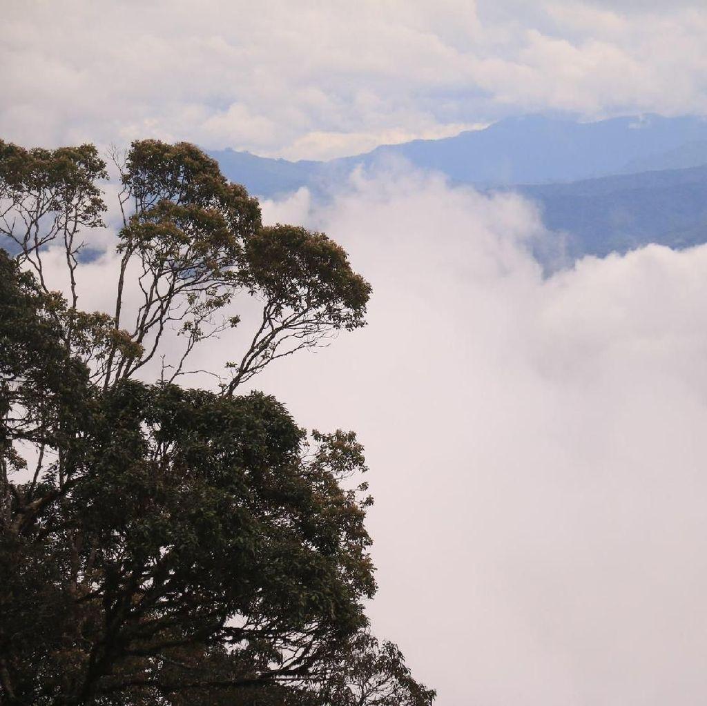 Foto: Indahnya Hutan Leuser yang Terus Dirusak
