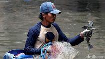 Serunya Menjaring Ikan Sapu-Sapu di Kali Anak Ciliwung