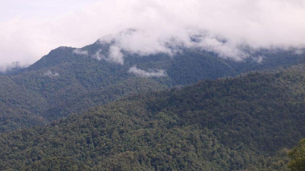 Hutan Taman Nasional Jambi Kian Tergerus Jadi Tambang-Kebun
