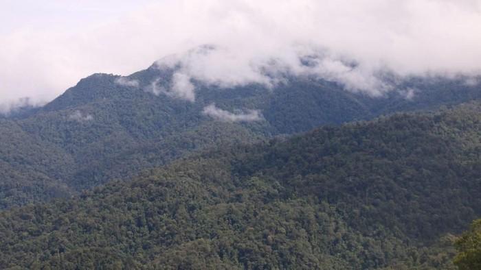 Ilustrasi kawasan hutan Gn Leuser di Aceh (Foto:  agus/detikcom)