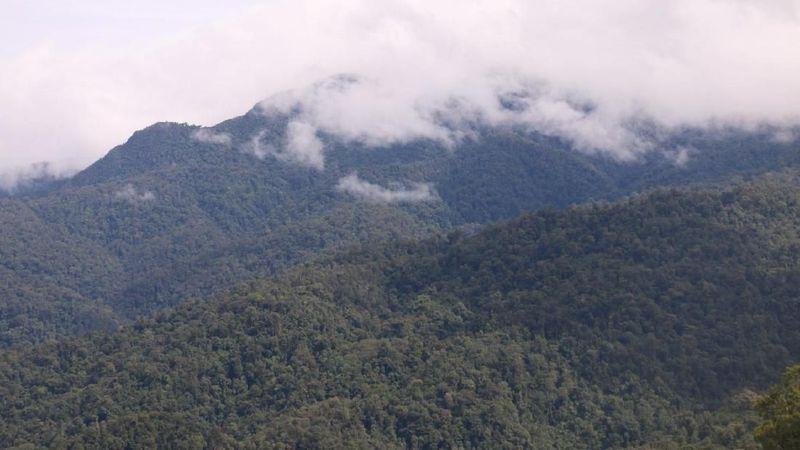 Pertama ada Taman Nasional Gunung Leuser di Provinsi Aceh dan Sumatera Utara. Aktor dan selebriti dunia Leonardo DiCaprio juga pernah main ke sini lho (Agus/detikcom)