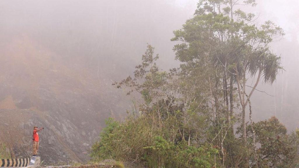 Hutan Leuser Aceh Terus Dirusak, Nasib Harimau di Ujung Tanduk