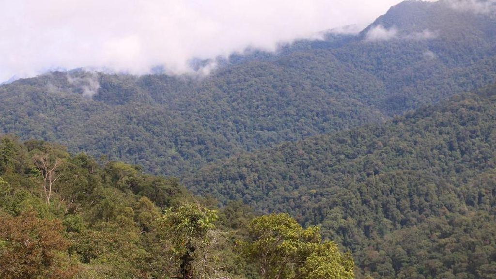 Menyusuri Indahnya Hutan Leuser Aceh yang Terus Dirusak
