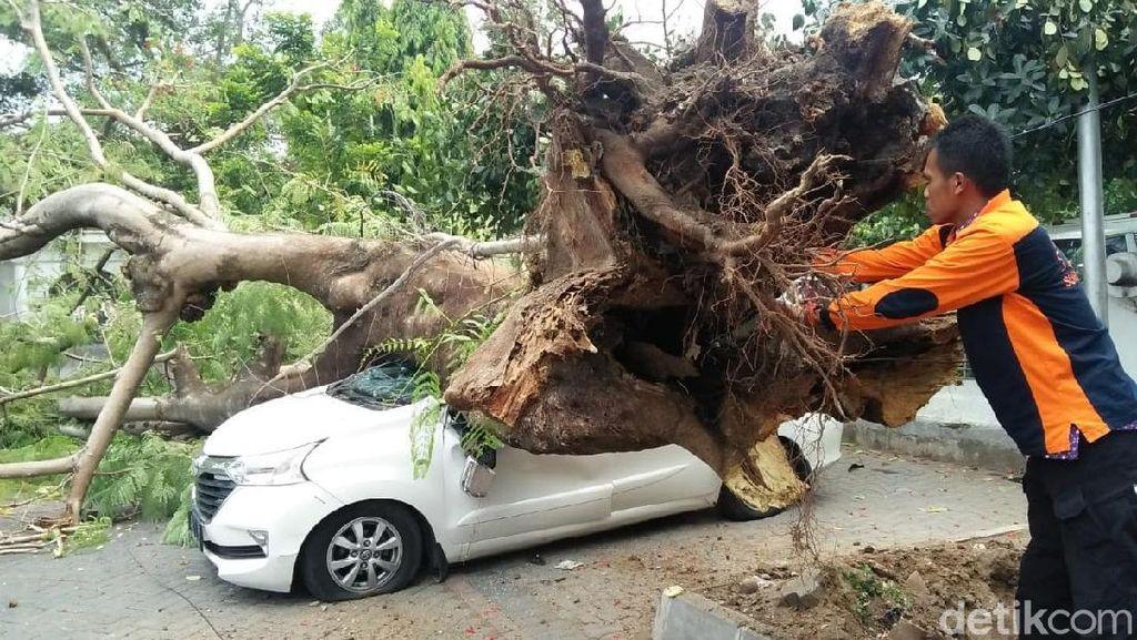 Pohon Flamboyan Besar Ini Tiba-tiba Tumbang Timpa Mobil di Solo