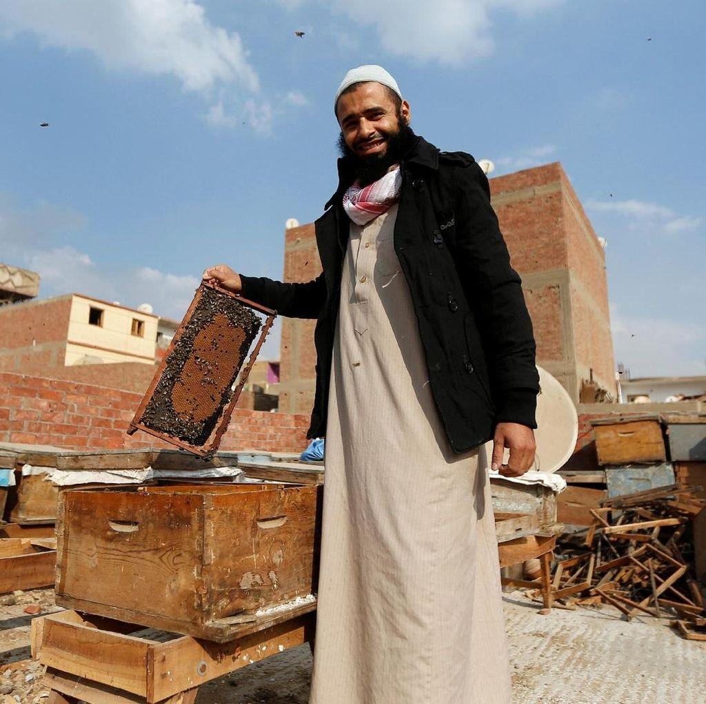 Berkenalan dengan Omar Abulhasan Terapis Lebah dari Mesir