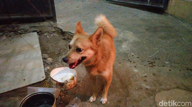 Anjing peliharaan di rumah keluarga korban pembunuhan di Bekasi