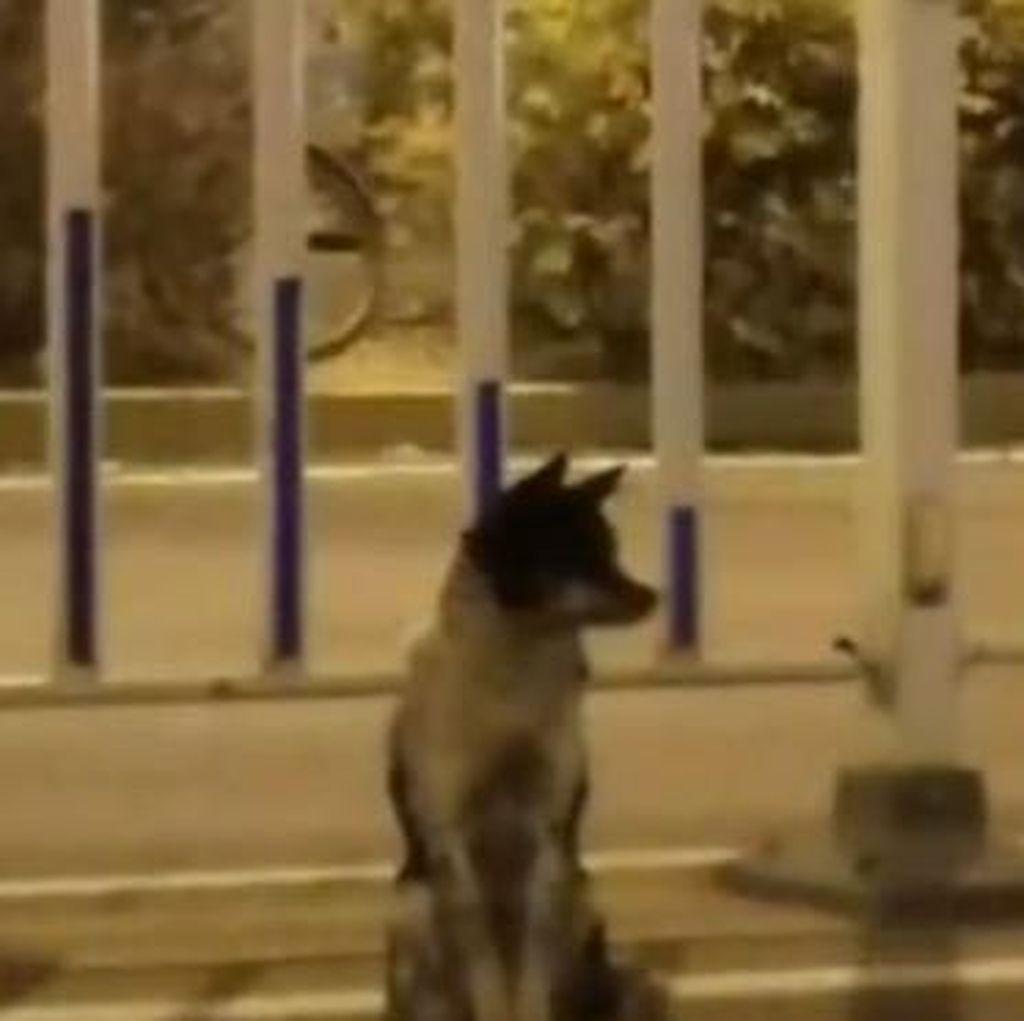 Anjing Ini Terus Menanti Majikan yang Telah Tiada Selama 80 Hari