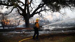 42 Orang Tewas, Petugas Berjibaku Padamkan Kebakaran di California