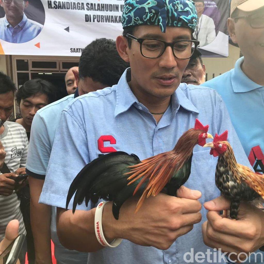 Sandiaga Pamer Ayam Owi-Owo: Bukan Diadu, Tapi Berpelukan
