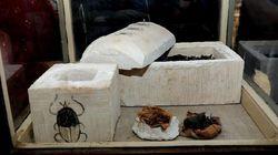 Mumi Kucing dan Kumbang Berumur 6.000 Tahun Ditemukan