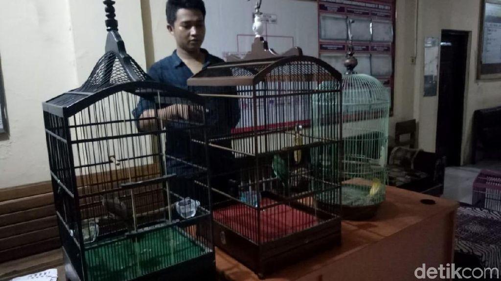 Gara-gara Burung, Pria di Pekalongan Ini Terancam Bui 6 Tahun