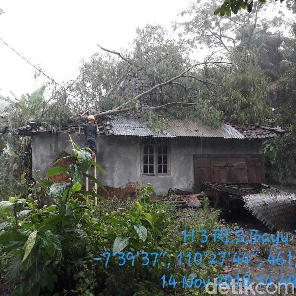 Hujan Deras di Sleman, Pohon Tumbang Timpa Rumah dan Travo