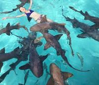 Ling Tan terhitung punya nyali juga. Dia berani berenang bareng hiu-hiu ini di Bahama. Kamu berani tidak traveler? (Instagram/@lingtan_)
