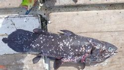 Sempat Disebut Punah, Ikan Purba 420 Juta Tahun Ini Masih Hidup
