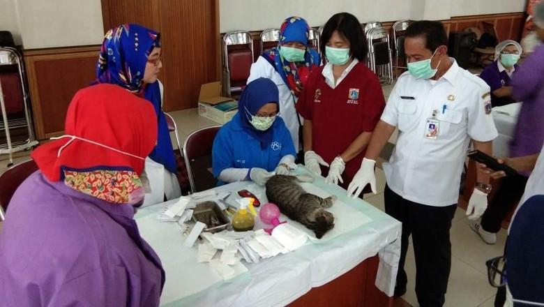 Ratusan Kucing di Jakarta Dikebiri karena Ledakan Populasi