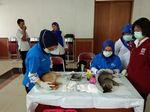 Foto: Proses Kebiri Ratusan Kucing di Jakarta