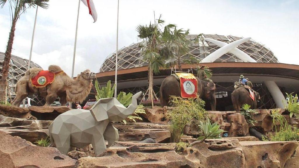 Unik Banget, Tamu Disambut Unta dan Gajah di Lobi Resor Ini
