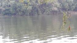 Penampakan Buaya di Bengawan Solo, Warga Diminta Tak Dekati Sungai