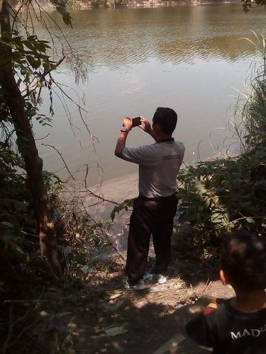 Penampakan Buaya di Bengawan Solo, BKSDA: Diduga Buaya Muara