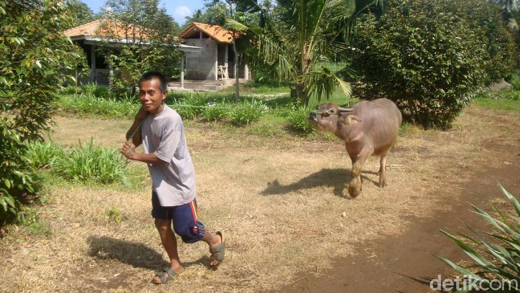 Dulu Angker, Kini Jadi Agrowisata