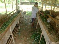 Wari, salah satu pengurus Agrowisata Bulak Barokah