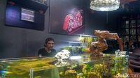 Mengenal Bisnis Kebun di Akuarium Aquascape