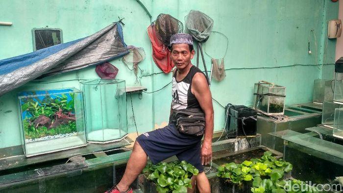 Foto: Obet penjual aquarium (Achmad Dwi-detikFinance)