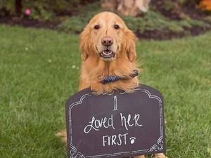 Foto-foto Gemas Anjing Jadi Bridesmaid dan Eksis di Pernikahan Majikannya