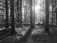 Menempatkan sumber cahaya di sela-sela pohon dalam membuat kesan dramatis.