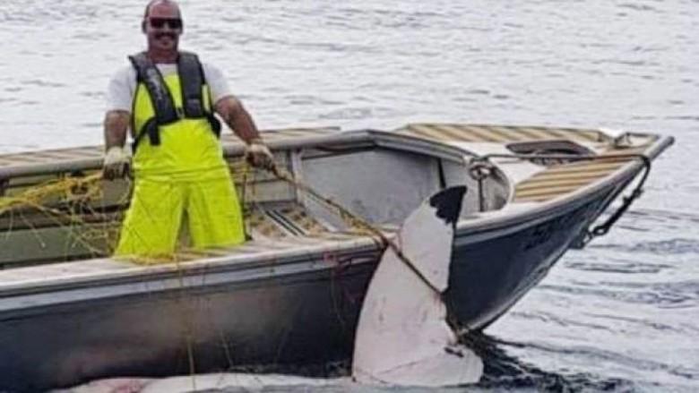 Hiu Putih 4,6 Meter Ditemukan Mati di Pantai Sydney