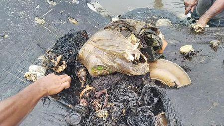 Foto: Isi Perut Bangkai Paus di Wakatobi yang Penuh Sampah