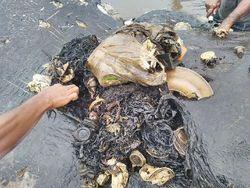 Respons Susi Soal Sampah Plastik yang Bikin Paus Mati di Wakatobi